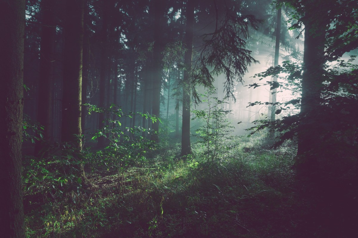 Walk Beneath the Canopy of 8 Fictional Forests